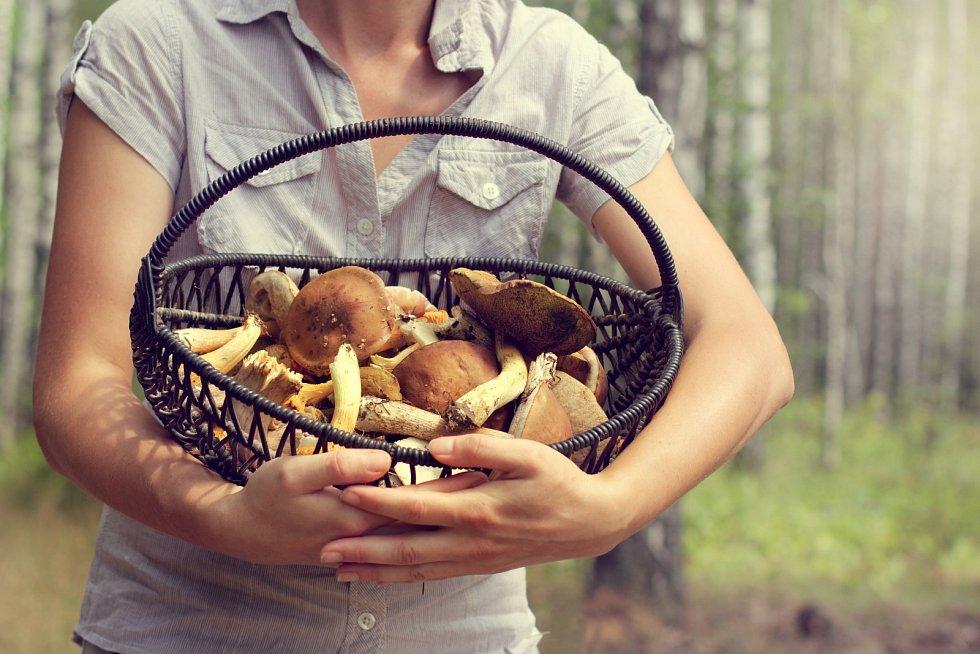 Vydejte se s košíkem do lesa a pak se svými úlovky začněte kouzlit v kuchyni.
