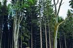 Stodůlecký vrch a rašeliniště: Největší vrchovištní rašeliniště chráněné krajinné oblasti Novohradské hory má přes padesát hektarů.