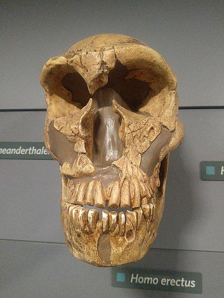 Nalezená lebka neandertálce