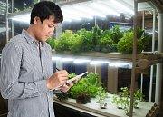 Vertikální farma - Ilustrační foto