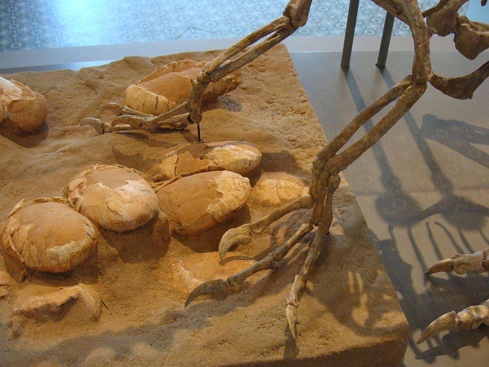 Oviraptoří fosilie s vejci v Královském belgickém ústavu přírodních věd
