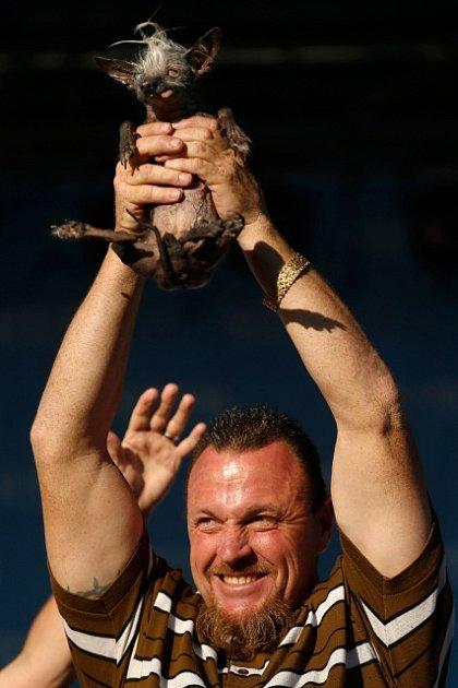 Sedmnáctiletá čivava skřivýma nohama a ublíženým pohledem se vkalifornské Petalumě stala vítězkou světové soutěže onejošklivějšího psa.