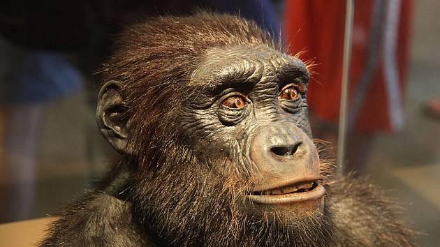 Některé vyhynulé hominidy známe. Třeba druh Sahelanthropus tchadensis, který žil ve střední Africe na území dnešního Čadu. Existoval ale i jiný. Neznámý, tajemný...