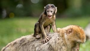 Šestý smysl zvířat