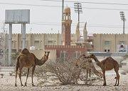 Prostředí, v němž byl stadion Al-Rayyanu vybudován, je vskutku exotické.