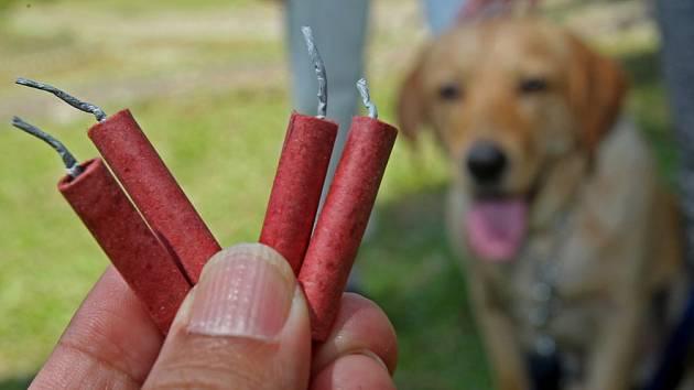 Pes a strach z petard, ilustrační foto