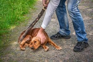 Týrání zvířat - Ilustrační foto