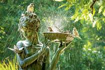 Ptáci milují– adokonce potřebují– koupání.
