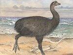Seznamte se. Nový největší pták světa z Madagaskaru vážil jako dinosaurus