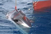 Tyto snímky krvácející velryby ohromily Australany.
