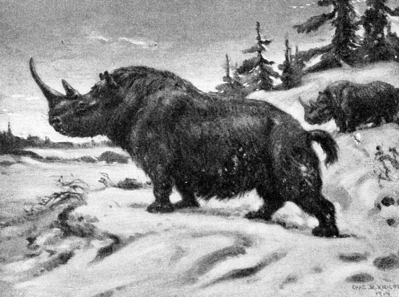 Obrazová rekonstrukce nosorožce srstnatého ze starší doby kamenné, v níž se mohl setkat i s člověkem