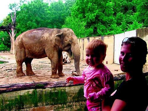 """Verunka Musílková se vypravila se svou maminkou Martou a dárkovým rodinným poukazem od Pražského deníku na výlet za zvířátky do Troji. Malá Verunka byla unešena ze všeho, co se kolem ní pohybovalo, ze slonů byla však doslova """"mimo""""."""