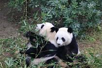Pandy Mej Lun a Mej Chuan, vychované v Atlantě, se snaží přizpůsobit se tomu, s čím se ještě nesetkaly.
