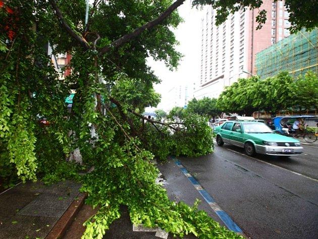 Tajfun Trami, který k čínskému pobřeží dorazil v noci na čtvrtek, zasáhl zejména provincie Če-ťiang a Fu-ťien na jihu země.