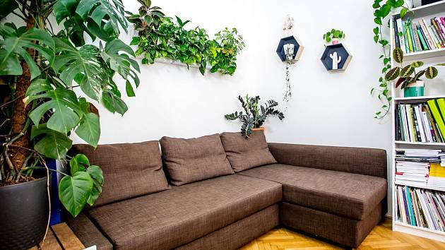 Nástěnná zahrada absorbuje hluk, ochlazuje a osvěžuje přehřáté prostory.