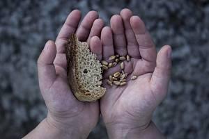 Chléb a pšenice v rukách dítěte. Ilustrační snímek
