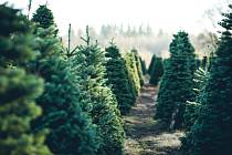 Vánoční stromky - Ilustrační foto