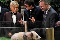 Brigitte Macronová pokřtila francouzské pandí mládě