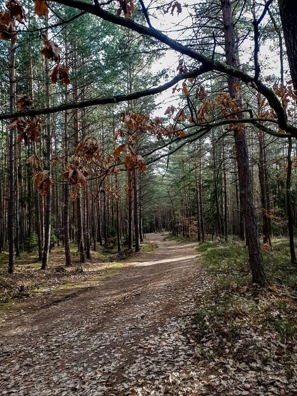Lesy v okolí Boskovic