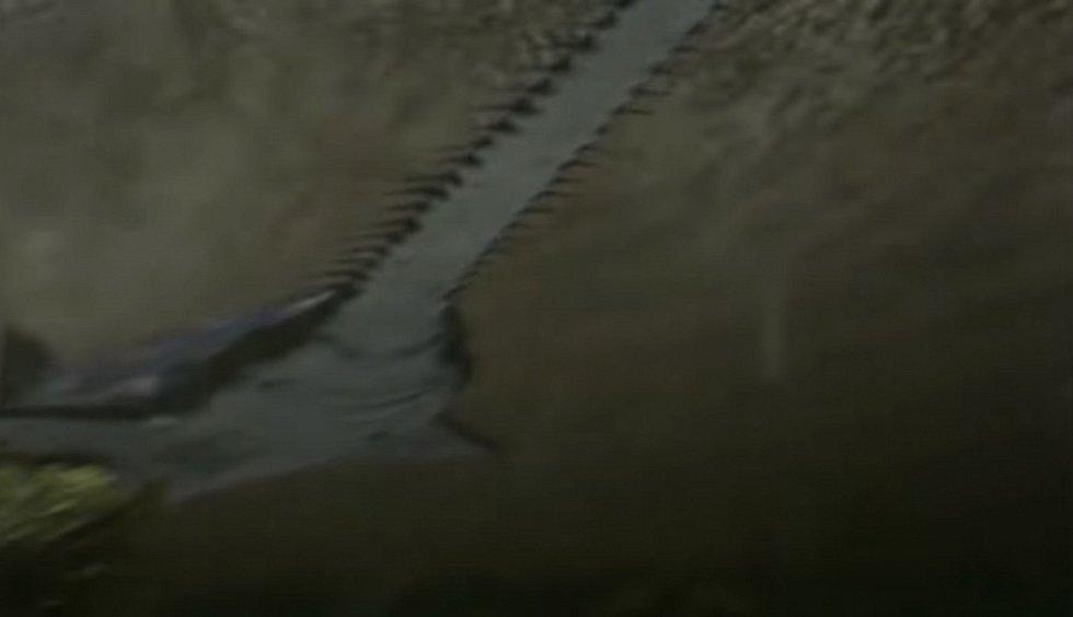 Hlavní složku potravy dinosaurů v Kem Kem představovaly zřejmě velké ryby. Včetně pilounovité paryby Onchopristis