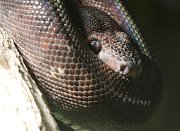 Had - ilustrčaní foto.