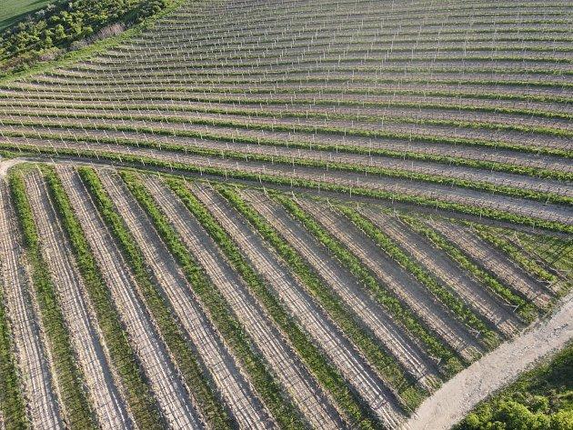Vinohrady Kráví hora