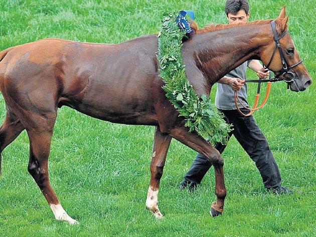 KDO BUDE DALŠÍ? Loni dostal věnec za triumf v derby kůň Medeo. Letos se očekává duel Budapest – Dick Morris.