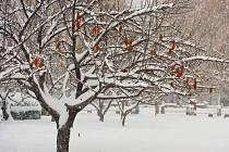zahrada pod sněhem