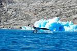 Klíčem k pomalejšímu stárnutí mohou být i velryby…
