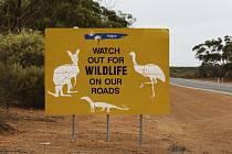 Dvanáctiletý školák procestoval z východu na západ bez řidičského oprávnění 1300 kilometrů.