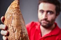 Zub nalezený v Austrálii dokazuje, že obří pravorvani žili i tam