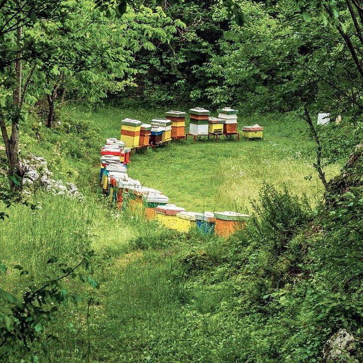 Správné umístění úlů je tak trochu alchymie. Měly by stát s česny obrácenými směrem na jihovýchod a je třeba zajistit, aby v odpoledních hodinách došlo k dostatečnému zastínění stromy, vyššími keři, blízkou stavbou apod.
