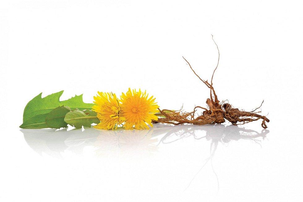 Listy akvěty sklízíme na jaře, kořen se sklízí od května do června ana podzim.