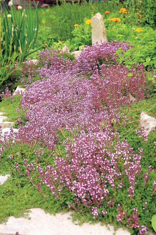 Vsouvislosti sbylinkami se do zahrad často doporučuje bylinková spirála. Je ale možné zvolit i bylinkový vrch čipyramidu.