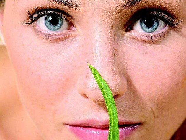 Aloe vera. Ilustrační foto