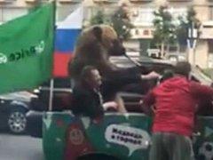 Medvěd projíždící v kabrioletu hrál na vuvuzelu a dělal rasistické gesto.