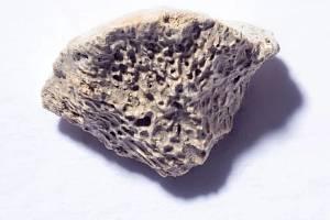 Deset tisíc let starý úlomek kosti aljašského psa