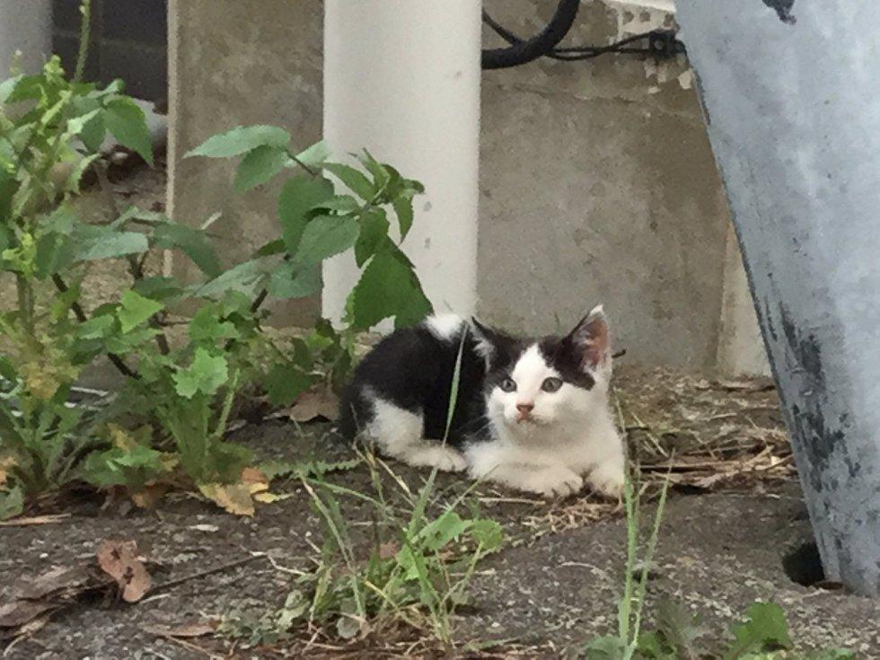 Na ostrově Taširodžima narazíte na kočky prakticky všude