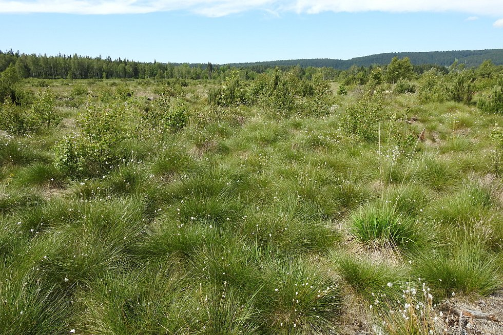 Perninské rašeliniště je přírodní památkou Jeho stáří se odhaduje na 12 tisíc let.
