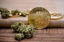 Marihuana a virtuální měna Bitcoin