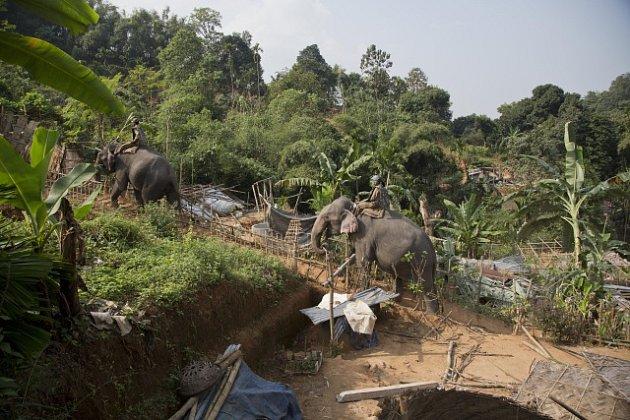V Assamu žije nejpočetnější sloní populace v Indii, čelí ale mnoha problémům