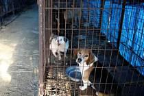 Uzavření největších psích jatek v Jižní Koreji