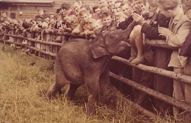 Slon cejlonský Baby