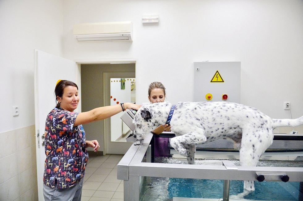 Veterinární rehabilitační klinika Jaggy v Praze.