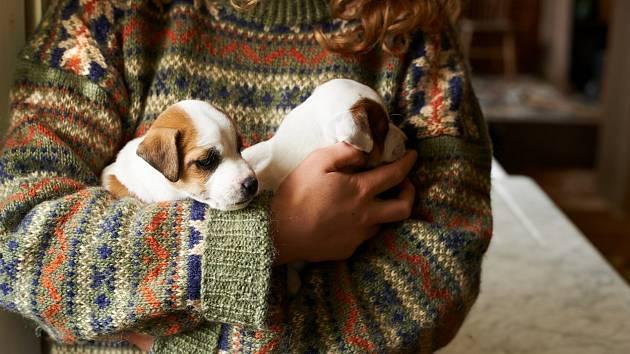 Při pořizování psího člena rodiny byste se měli vyhnout čím dál častěji diskutovaným problematickým chovům neboli množírnám.