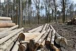 Ceny stavebního dřeva rostou.