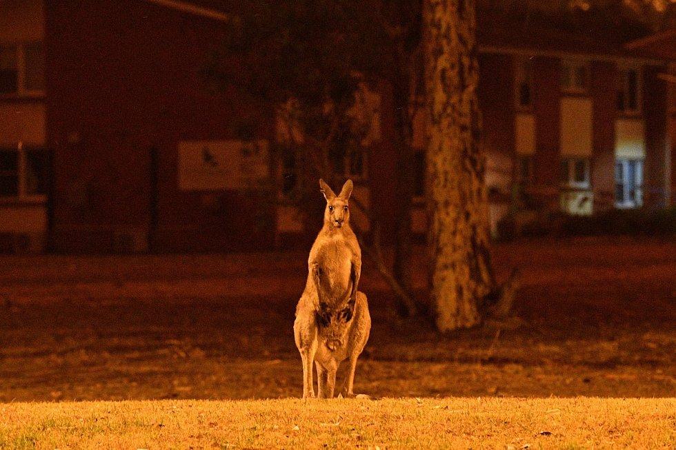 Austrálii trápí požáry