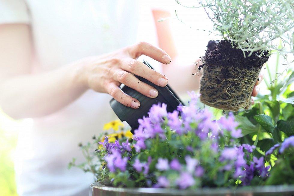 Pokud chcete mít květiny na balkoně, je nutné zvolit správný druh rostliny i typ truhlíku.