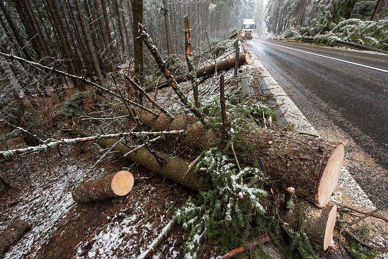 Kvůli popadaným stromům byla 4. února 2020 v obou směrech uzavřená frekventovaná silnice I/4 mezi Vimperkem a Strážným na Prachaticku. Stromy poblíž Klášterce polámal noční vítr. Na snímku je situace po odstranění spadaných stromů.