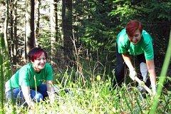 Zaměstnanci Sberbank vysadili v Beskydech 700 nových stromků.
